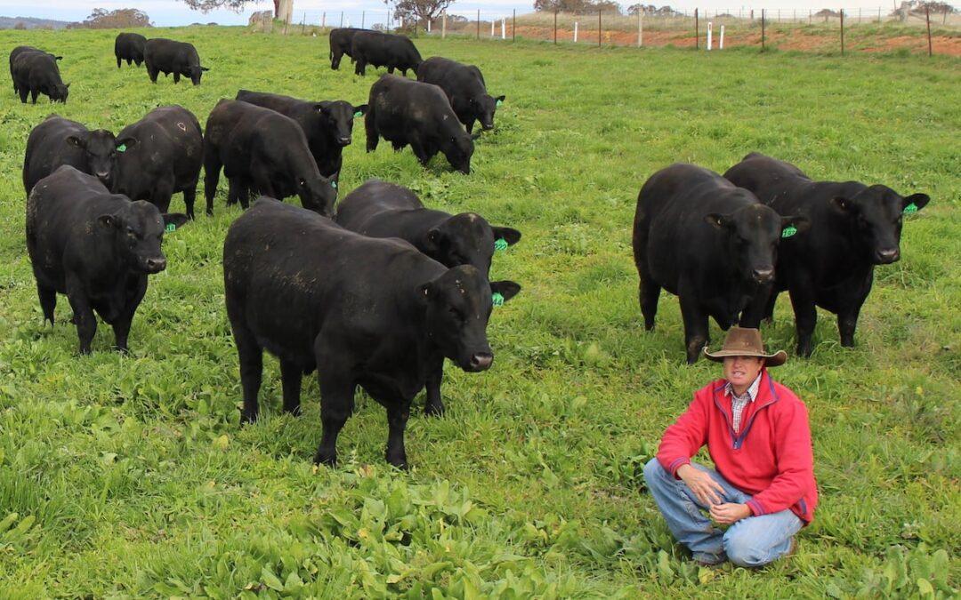 2020 Annual Bull Sale