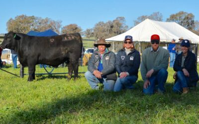 Choice Angus bull sale hits $9500 top, three times